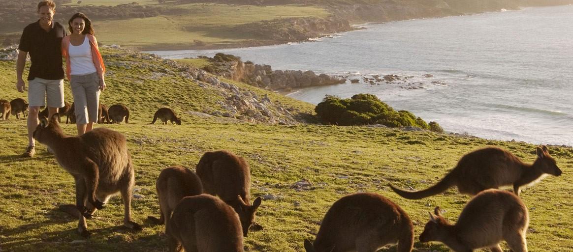 Stokes-Bay-Clifftop